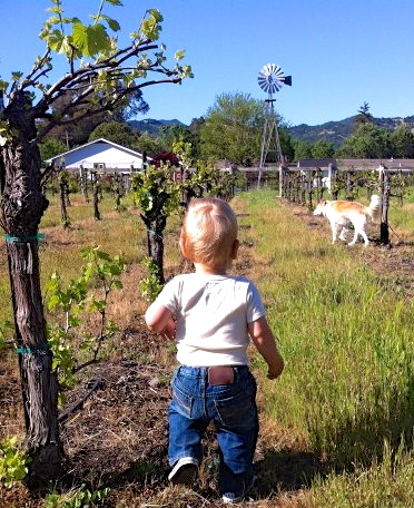 Liam in the Vineyard