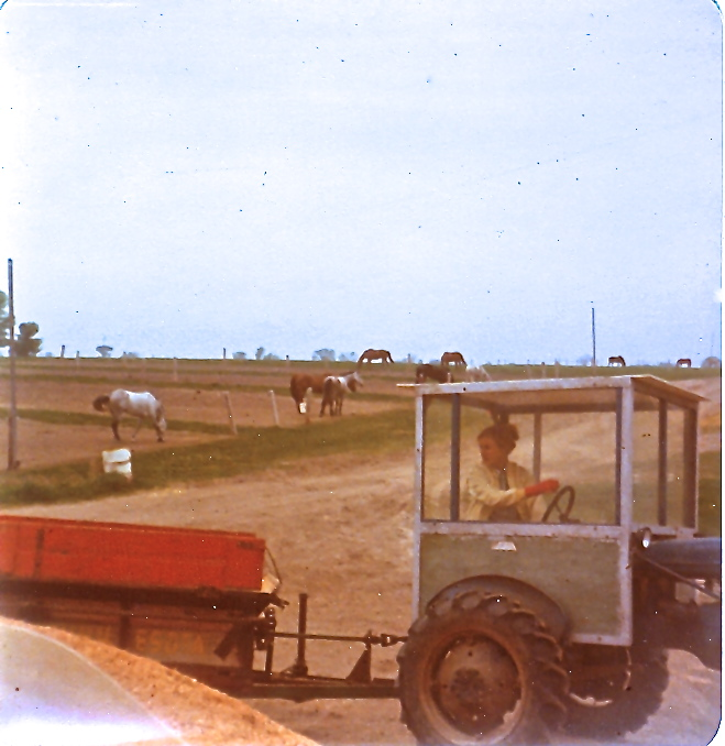 Spreading manure.