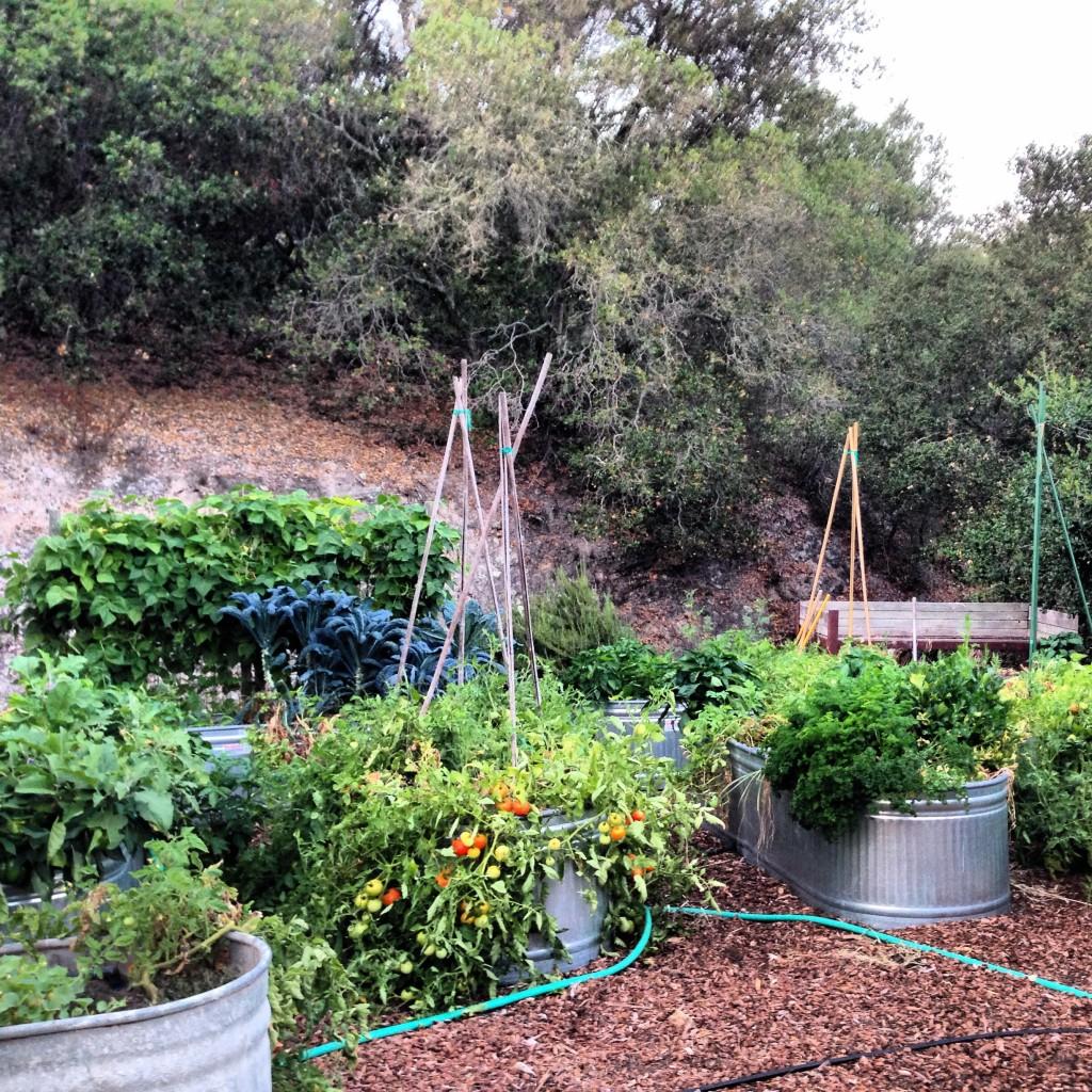 Sonoma organic garden.