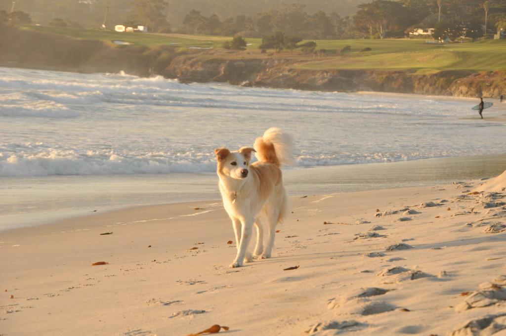Mia in the sand.