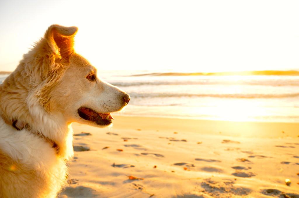 Mia on the beach at Sunset