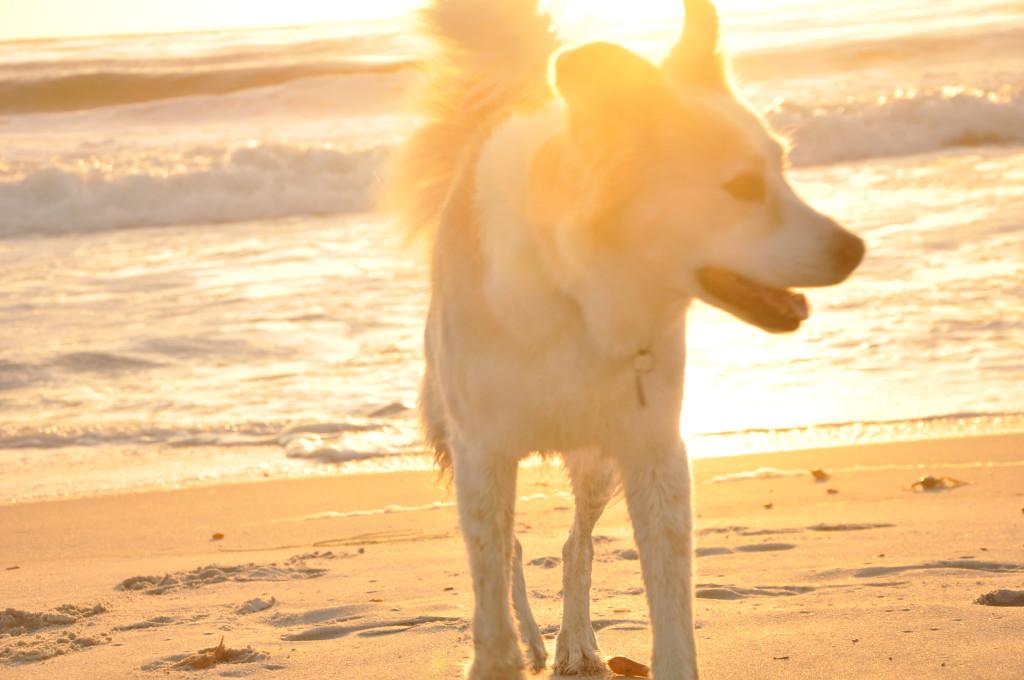 Sunny dog.