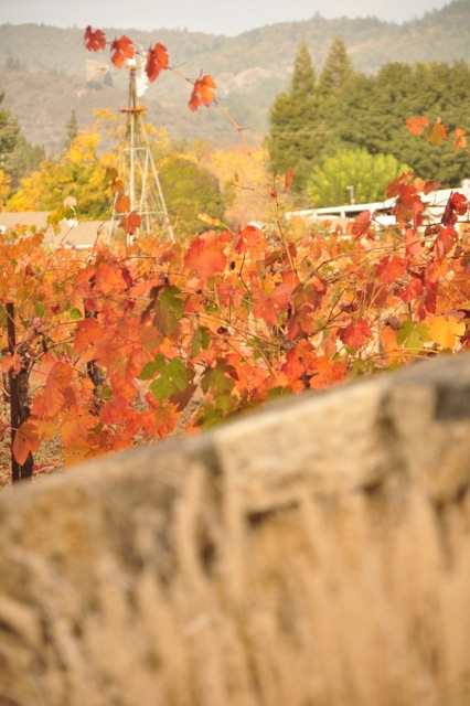 Soft brown grasses, brilliant leaves on the vines, and a background of Sonoma's green hills.