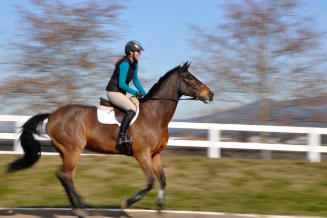 Bay horse running.