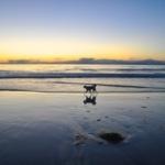 Border-collie mix on Carmel's beach