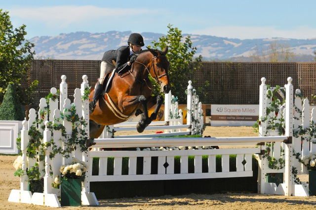Warmblood horse, Metro, competing in a hunter derby at Sonoma Horse Park in Petaluma , California in September 2014.