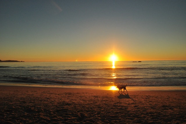 My border-collie mix on Ocean Beach in Carmel at sunset.