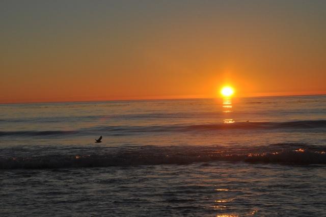 Bird and setting sun at Ocean Beach in Carmel
