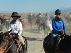 My friends on a 100 mile horse and mule drive.