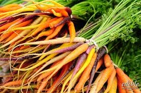 A bunch of Farmer's Market carrots. Trueheartgal.