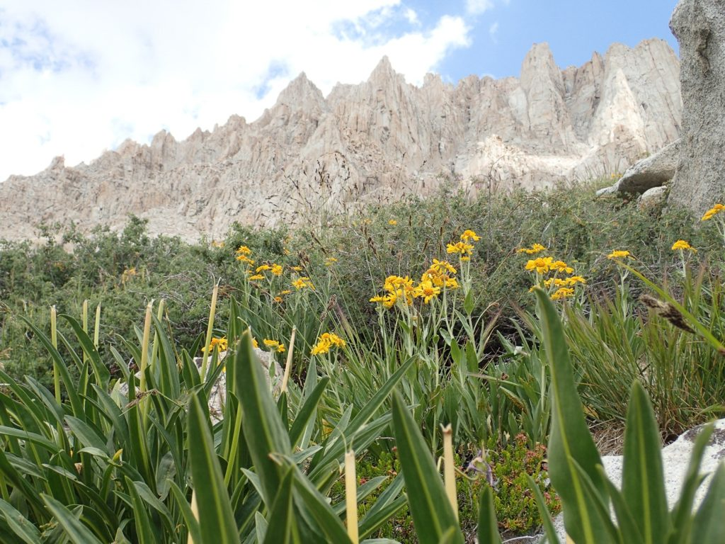 A view of Mt. Whitney buttress from my campsite at Guitar Lake, which sits at 3,500 feet above sea level. Life lessons from climbing the highest peak in the lower 48.